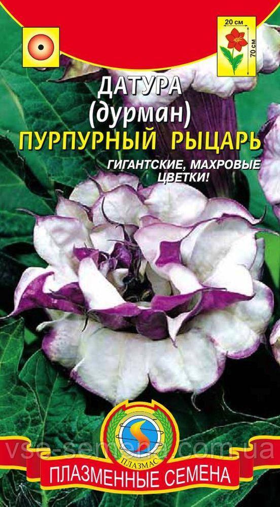 Датура (Дурман) ПУРПУРНЫЙ РЫЦАРЬ 4 шт (Плазменные семена)