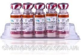 Вакцина Биофел РСН R для котов 1 доза