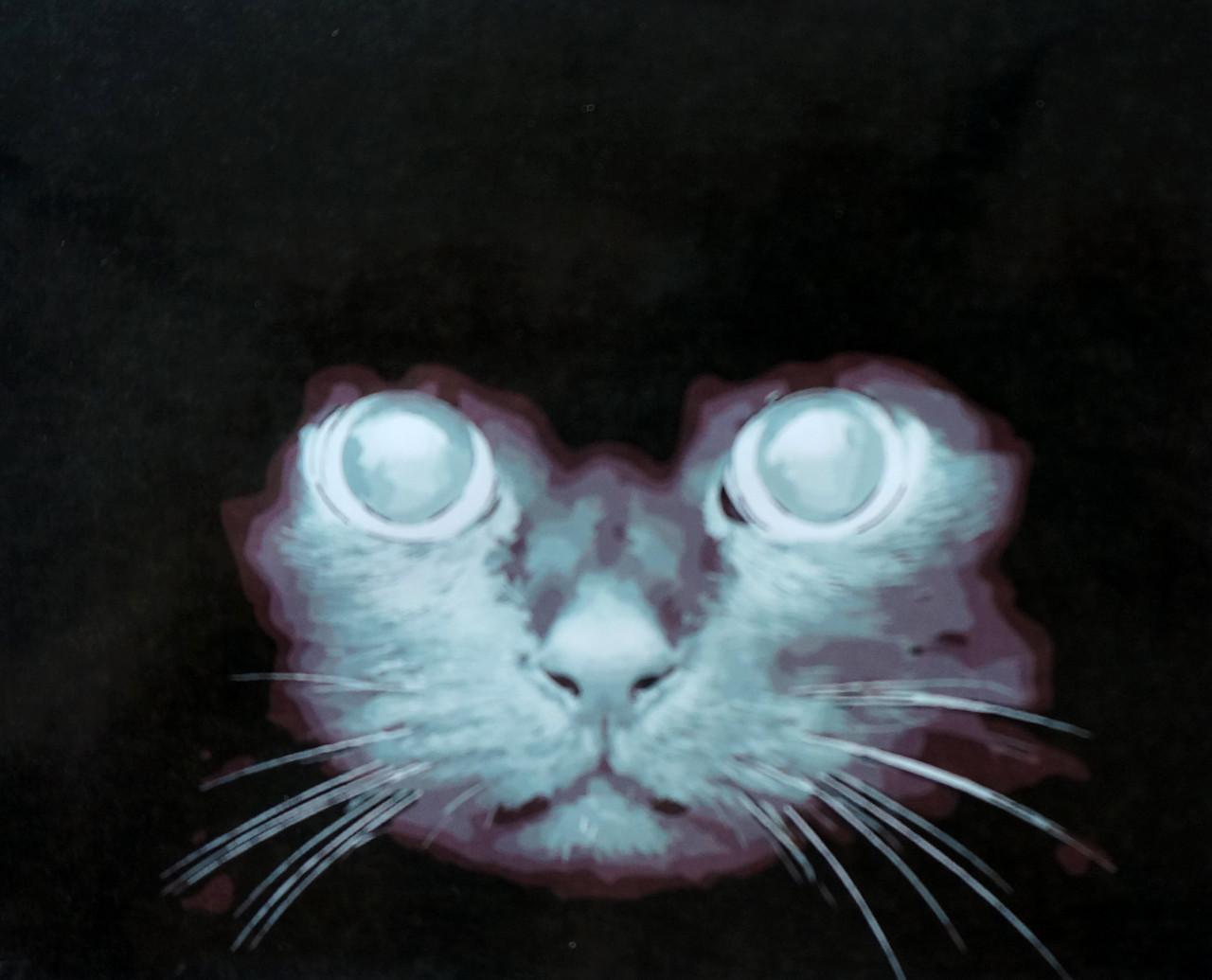 Картина по номерам Взгляд кошки, 40x50 см., Mariposa