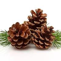 Шишки Сосновые натуральные чистые Высушенные, 3-7 см, 25 шт/уп