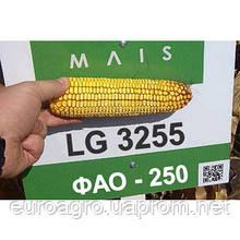 Семена кукурузы LG 3255 от МАИС (Черкассы)