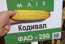 Семена кукурузы ФАО  290  Кодивал от МАИС (Черкассы)