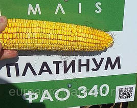 Семена кукурузы Платинум ФАО 340 от МАИС (Черкассы)