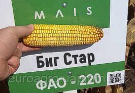 Семена кукурузы Биг Стар от МАИС (Черкассы)