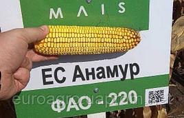 Семена кукурузы ЕС Анамур от МАИС (Черкассы)