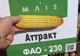Семена кукурузы Аттракт от МАИС (Черкассы)