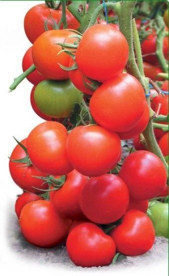 Семена томата Тайлер F1, Kitano 500 семян   профессиональные