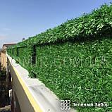 Зелений паркан декоративний, фото 5