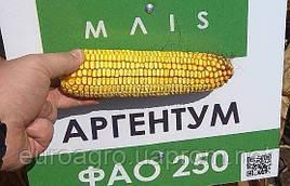 Семена кукурузы Аргентум от МАИС (Черкассы)