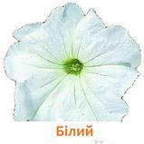 Петунія Фалкон F1 (колір на вибір)1000 шт., фото 2