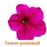 Петунія Фалкон F1 (колір на вибір)1000 шт., фото 3