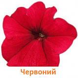 Петунія Фалкон F1 (колір на вибір)1000 шт., фото 4