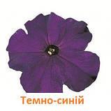 Петунія Фалкон F1 (колір на вибір)1000 шт., фото 6