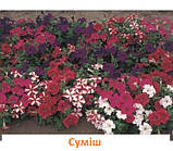 Петунія Фалкон F1 (колір на вибір)1000 шт., фото 7