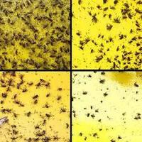 Липкие экраны двусторонние для отлова насекомых 470*210 мм