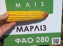Семена кукурузы Марлиз от МАИС (Черкассы)