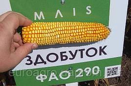 Семена кукурузы Здобуток от МАИС (Черкассы)