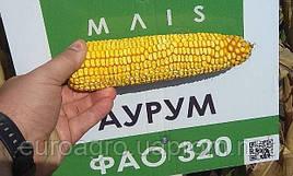 Маис Черкассы  семена кукрузы Аурум ФАО 320