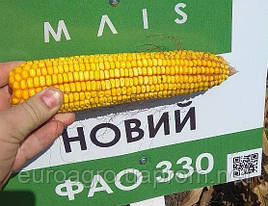 Маис Черкассы семена кукурузы Новый ФАО 330