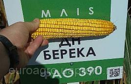 Семена кукурузы ДН Берека ФАО 390 от Маис Черкассы