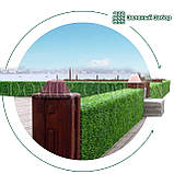 Зелений паркан декоративний, фото 10