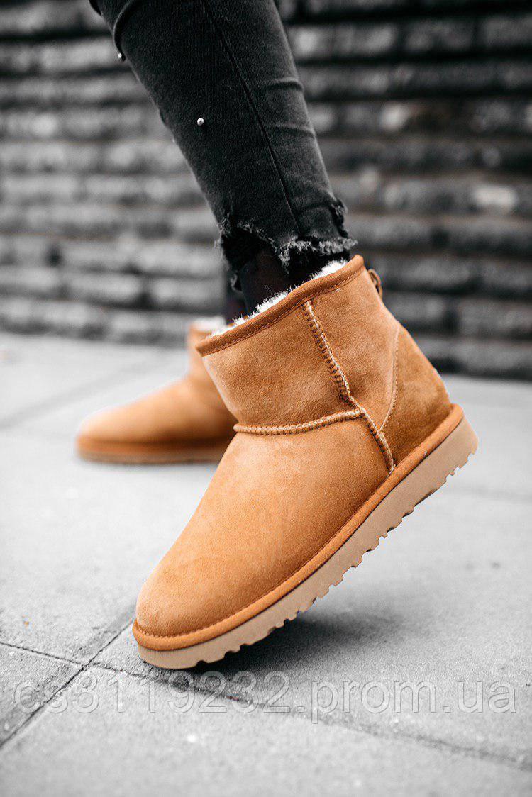 Жіночі чоботи зимові UGG CLASSIC MINI (руді)