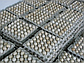 Инкубационное яйцо бройлера росс 708 (Украина) Польша, фото 3