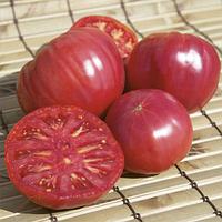 Семена томата Торбей F1, Bejo 1 000 семян | профессиональные, фото 1