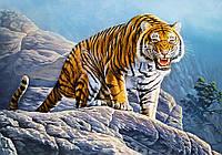 Пазлы Тигр на скалах на 500 элементов