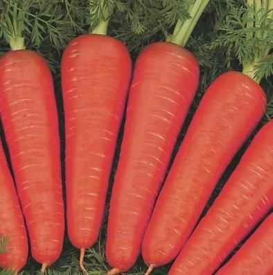 Семена моркови Канада F1, Bejo 1 000 000 семян (1.8-2.0)