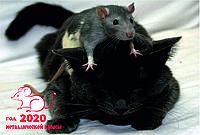 Магнит на холодильник. Год мыши (крысы) 2020. Символ года. Виниловый магнит