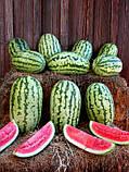 Семена, арбуз Клондайк / Klondike  (Италия), 500 грамм (ориентировочно 9000 семян), фото 2