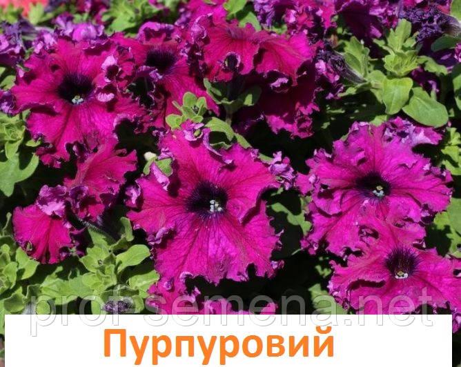 Петунія Афродіта F1 пурпурова 20 шт.