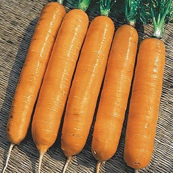 Семена моркови Навал F1, Bejo 1 000 000 семян (1.6-1.8)