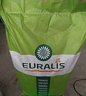 Семена Подсолнечника Евралис Белла  (стійкий до 7 рас вовчка)