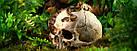 Декорация Hagen Череп человека (РТ2855), фото 2
