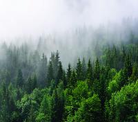 Фотообои Лес и туман арт.10220182
