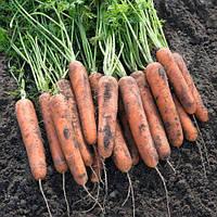Семена моркови Натуна F1, Bejo профупаковка 1 000 000 семян (2.0-2.2) Семена овощей профессиональные