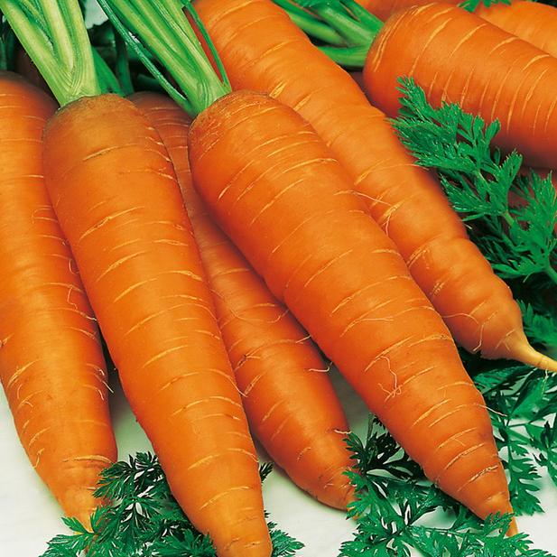 Профессиональные семена моркови Ниланд F1 Нантский сортотип, Bejo крупная фасовка 1 000 000 семян (2.0-2.2)