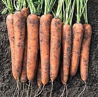 Профессиональные семена моркови Норвей F1, Bejo Семена овощей крупная фасовка 1 000 000 семян (2.2-2.4)
