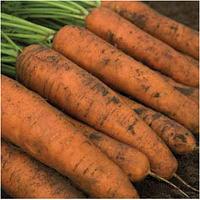 Семена моркови Белградо F1, Bejo 1 000 000 семян (1.6-1.8) | профессиональные, фото 1