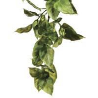 Растение Hagen Amapallo маленькое (РТ3001)