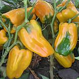 Джемини F1 1000 шт семена сладкого перца Nunhems Голландия, фото 3