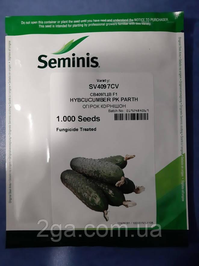Супер ціна!!! СВ 4097 КВ F1 / SV 4097 CV F1 - Огірок,Seminis. 1000 насінин
