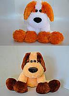 Собака Дружок 36*45см, 2 цвета (12.08.03)