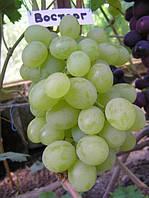 Саженцы и черенки винограда Восторг