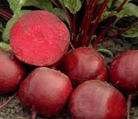Семена свеклы Беттолло F1, Bejo 50 000 семян   профессиональные, фото 1