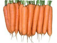 Семена Моркови ЭЛЕГАНС F1 (1,8-2,0)  100000 семян Nunhems