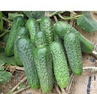 Семена Огурца ПЛАТИНА F1  1000 семян Nunhems