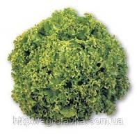 Насіння салату ОНІКС (драже) 5 000 насінин Nunhems